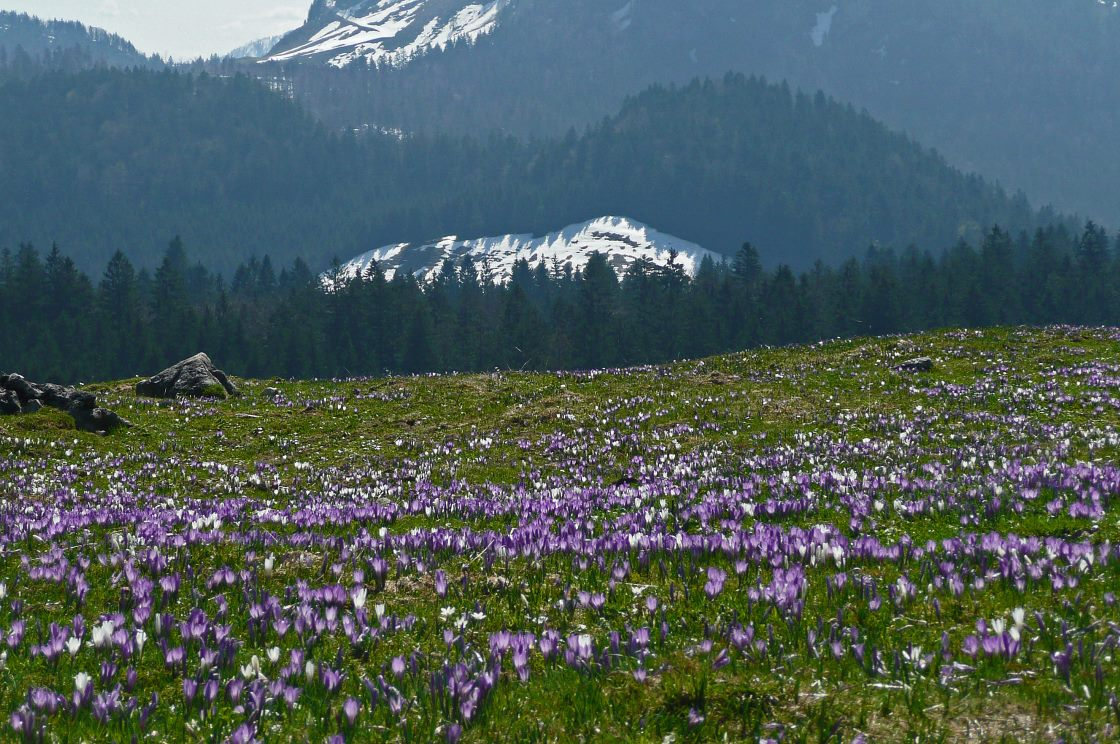 Ausflugsziele im Chiemsee-Alpenland