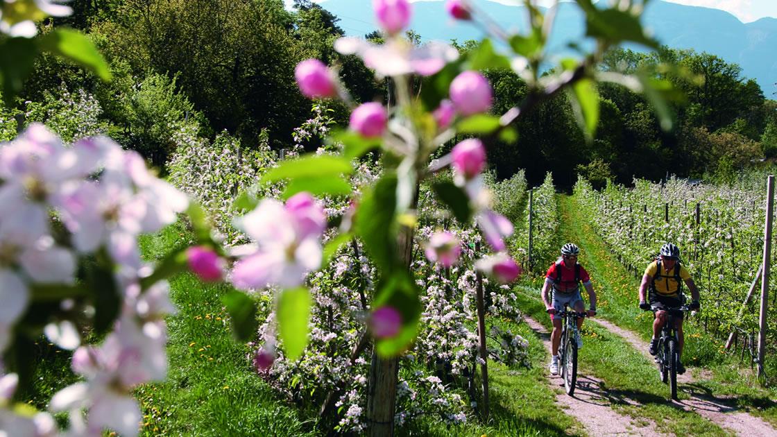 Frühling in Südtirol_Wandern_Apfelblüte