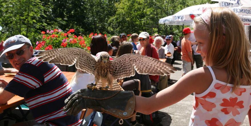 Greifvogelschau Falke auf Kinderarm