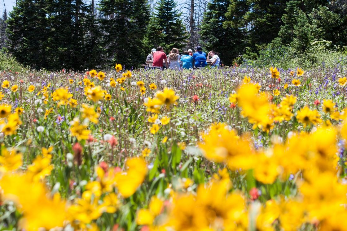 Picknick auf einer Alpen Blumenwiese