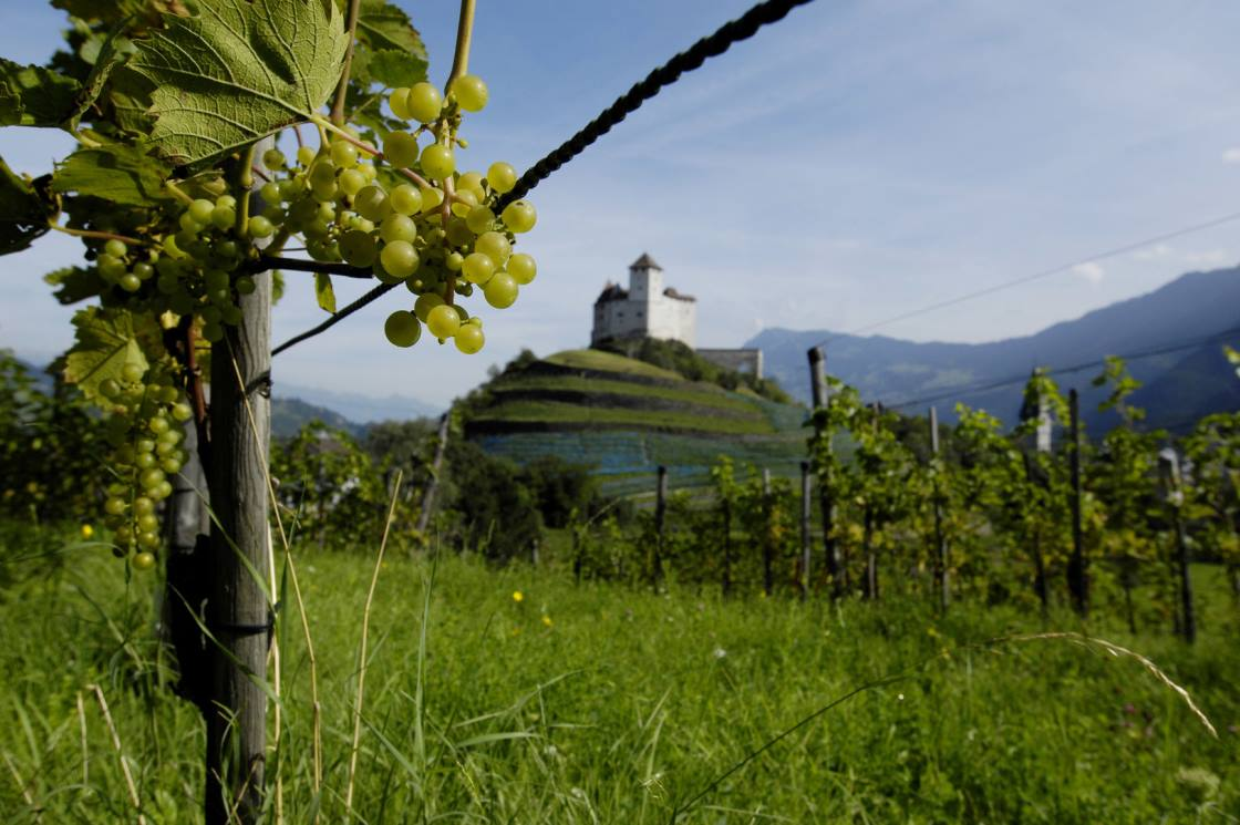 Genusstour zu den Weingütern Liechtensteins