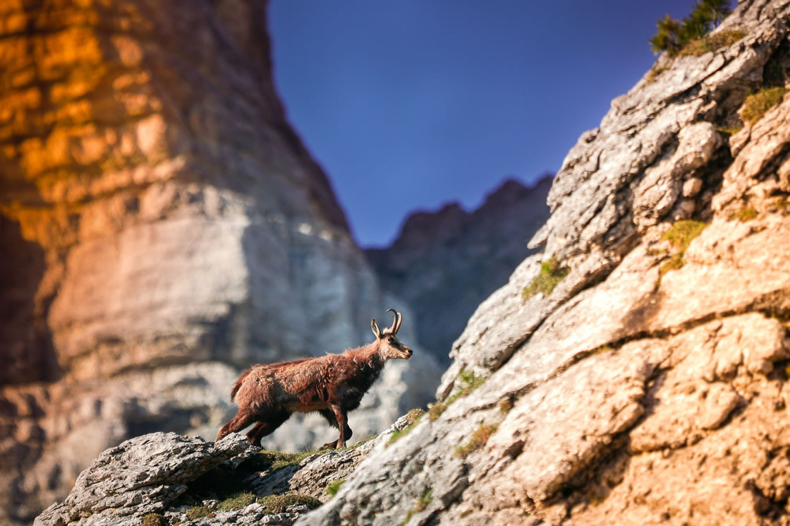 Wildtierbeobachtung alpen Schweiz