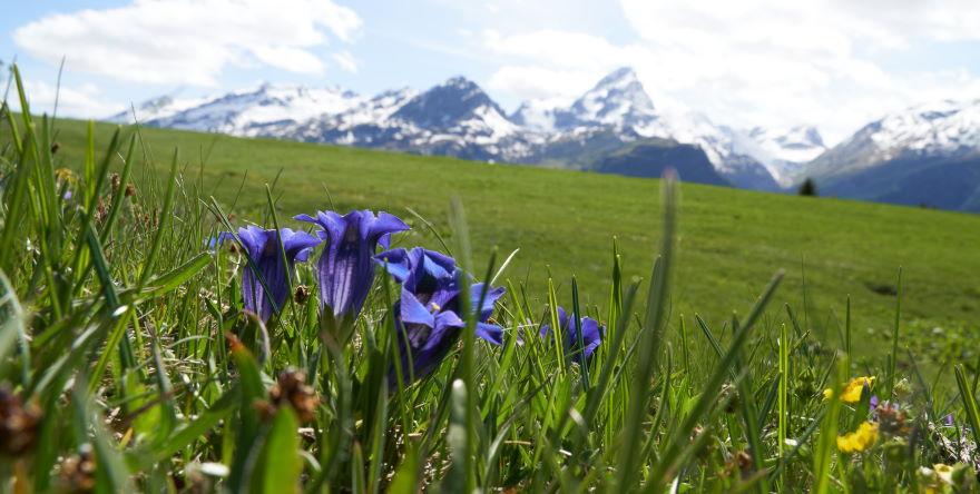 Urlaub Berghütte Schweiz, Berghaus Piz Platta