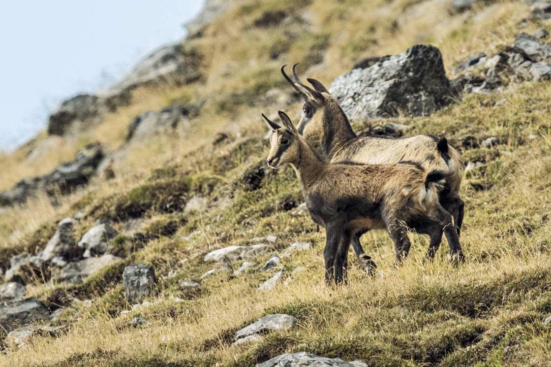 Wildtierbeobachtung im Schweizer Nationalpark