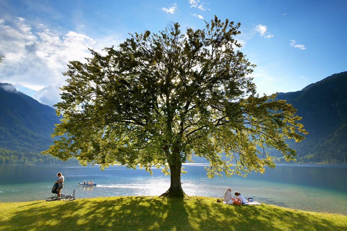 Ufer See Bohinj
