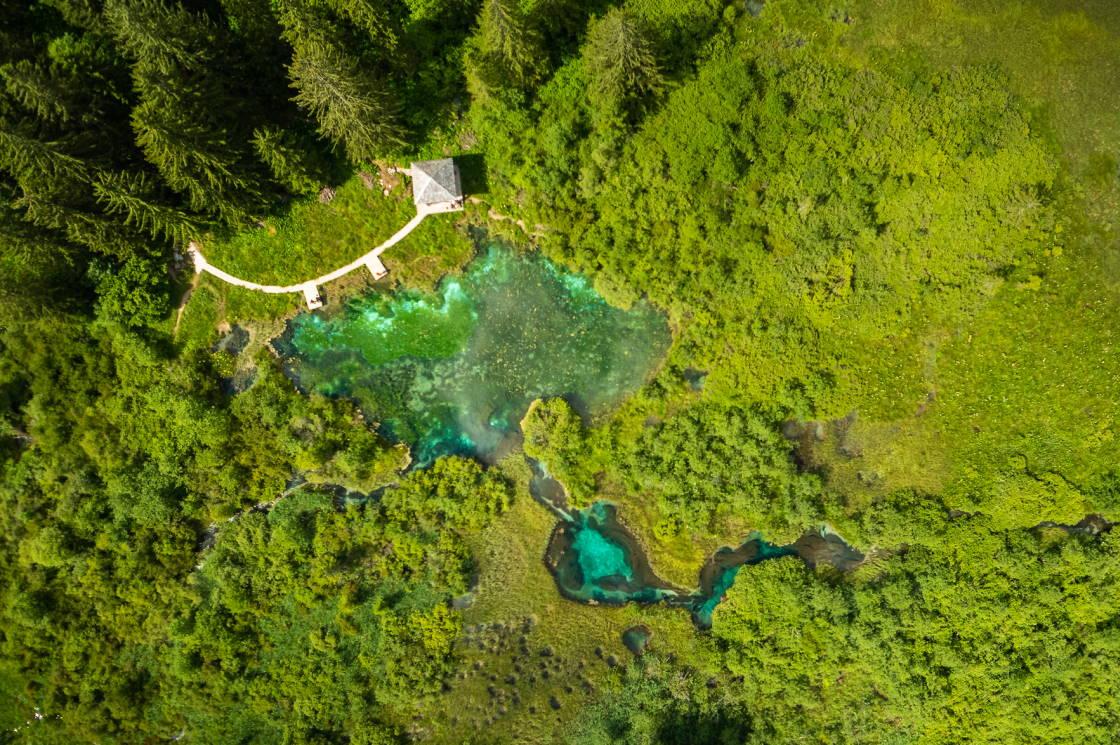 seen zelenci kranjska gora