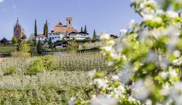 Wandern in Südtirol zur Apfelblüte