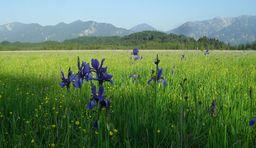 Murnau_Urlaub in den Alpen