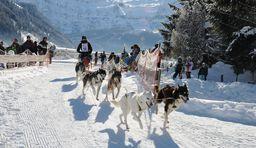 Schlittenhunderennen in den Schweizer Alpen