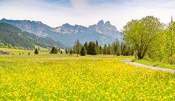 Alpen Frühling Tannheimer Tal