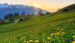 Blüten Wanderweg Gnalp Liechtenstein